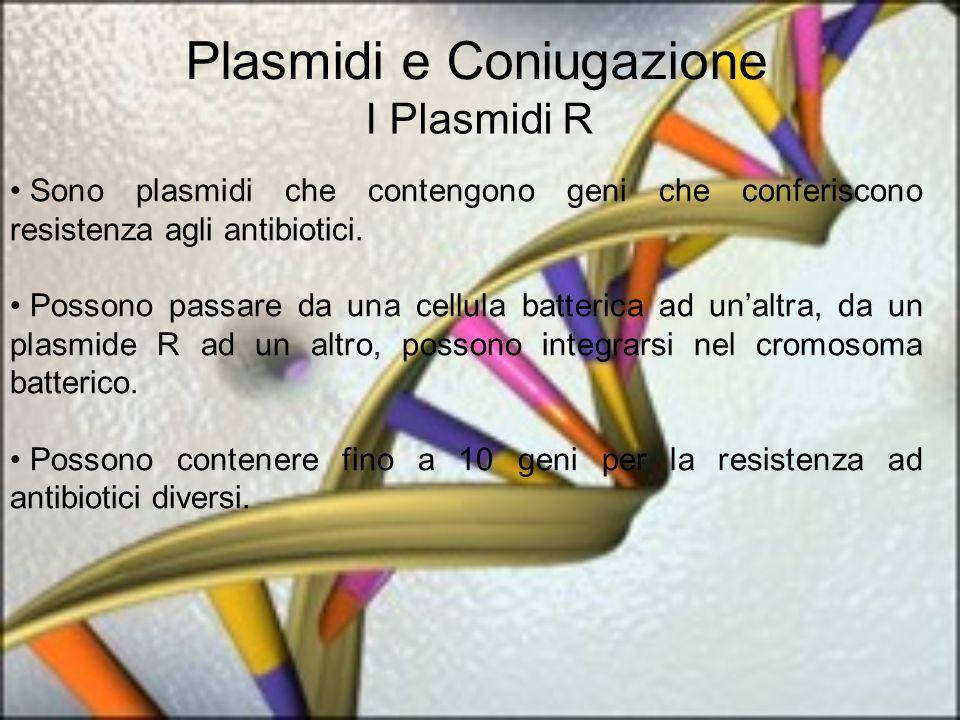 Plasmidi e Coniugazione I Plasmidi R Sono plasmidi che contengono geni che conferiscono resistenza agli antibiotici. Possono passare da una cellula ba