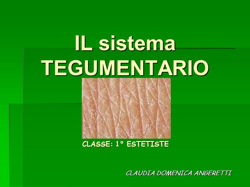 IL sistema TEGUMENTARIO CLAUDIA DOMENICA ANGERETTI CLASSE: 1° ESTETISTE