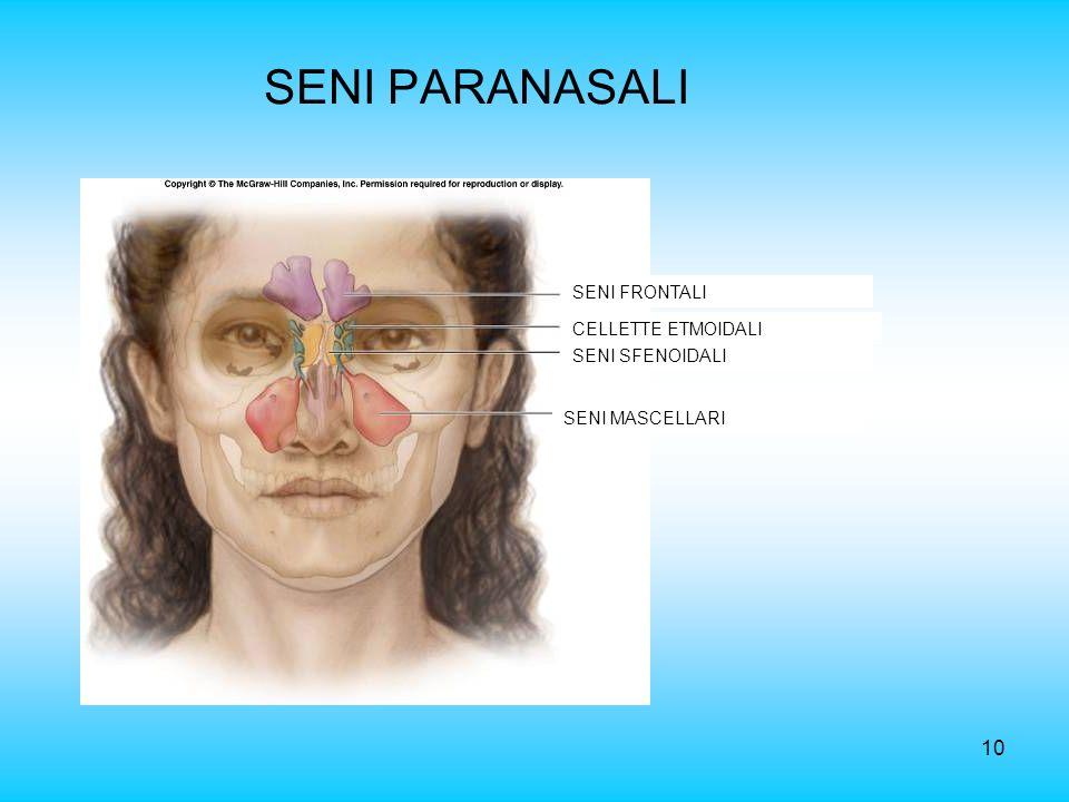 10 SENI PARANASALI SENI FRONTALI SENI MASCELLARI SENI SFENOIDALI CELLETTE ETMOIDALI