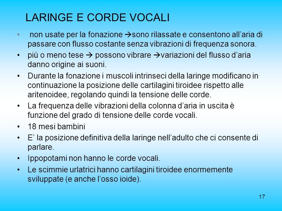 17 LARINGE E CORDE VOCALI non usate per la fonazione sono rilassate e consentono allaria di passare con flusso costante senza vibrazioni di frequenza