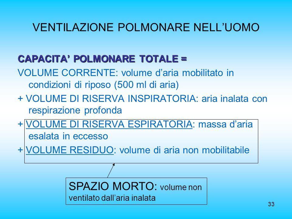 33 VENTILAZIONE POLMONARE NELLUOMO CAPACITA POLMONARE TOTALE = VOLUME CORRENTE: volume daria mobilitato in condizioni di riposo (500 ml di aria) + VOL