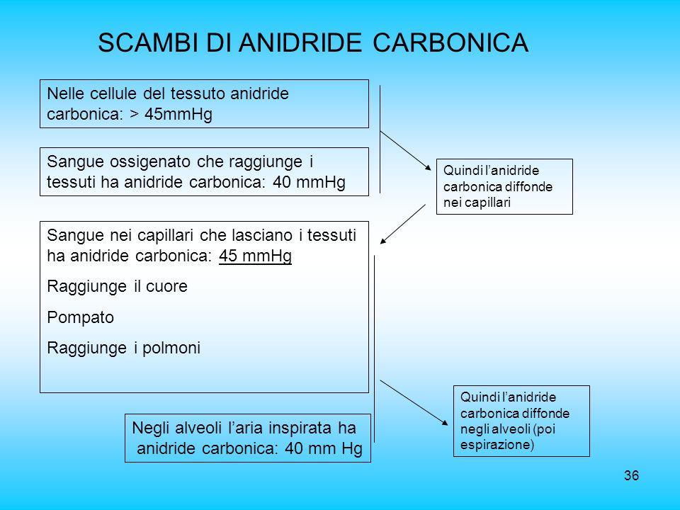 36 SCAMBI DI ANIDRIDE CARBONICA Nelle cellule del tessuto anidride carbonica: > 45mmHg Sangue ossigenato che raggiunge i tessuti ha anidride carbonica