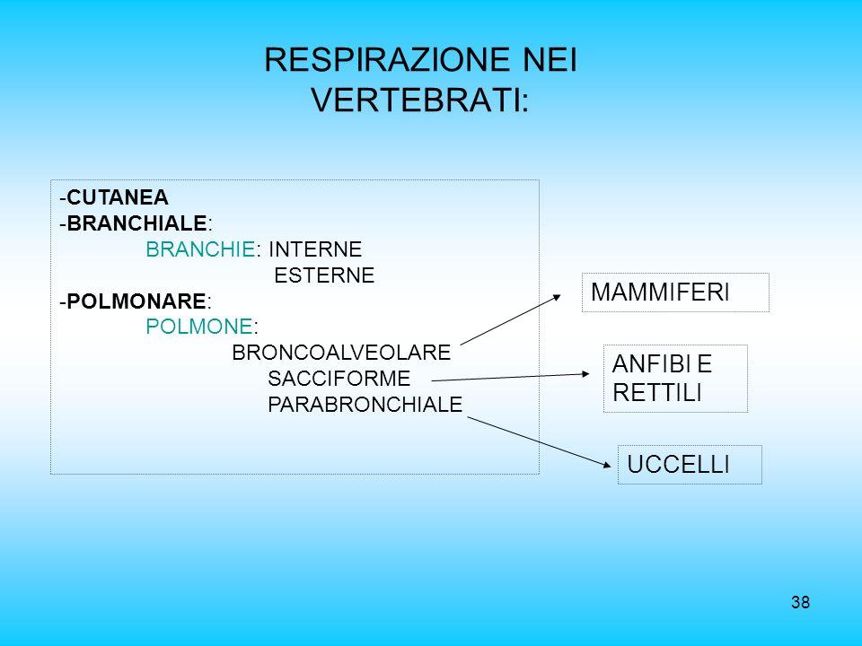 38 RESPIRAZIONE NEI VERTEBRATI: -CUTANEA -BRANCHIALE: BRANCHIE: INTERNE ESTERNE -POLMONARE: POLMONE: BRONCOALVEOLARE SACCIFORME PARABRONCHIALE ANFIBI