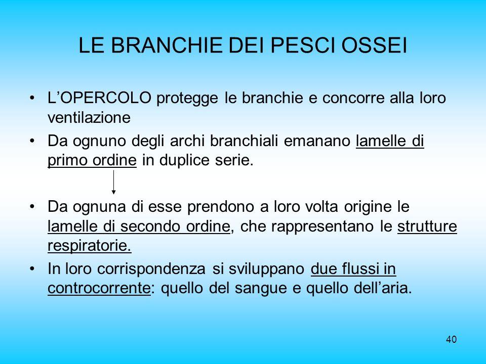40 LE BRANCHIE DEI PESCI OSSEI LOPERCOLO protegge le branchie e concorre alla loro ventilazione Da ognuno degli archi branchiali emanano lamelle di pr