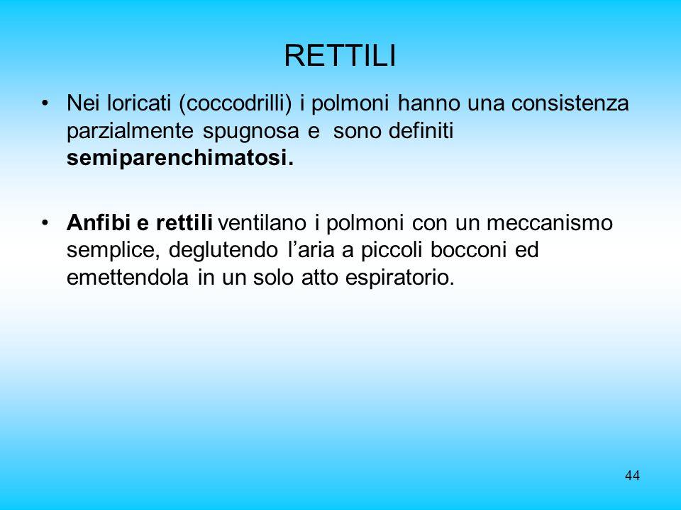44 RETTILI Nei loricati (coccodrilli) i polmoni hanno una consistenza parzialmente spugnosa e sono definiti semiparenchimatosi. Anfibi e rettili venti