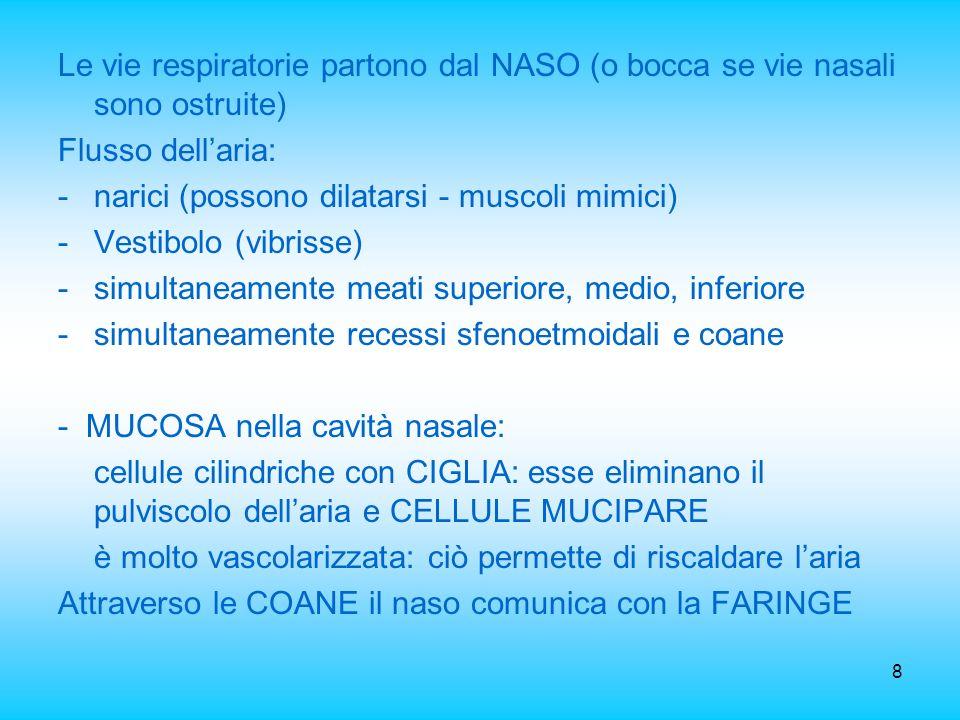 8 Le vie respiratorie partono dal NASO (o bocca se vie nasali sono ostruite) Flusso dellaria: -narici (possono dilatarsi - muscoli mimici) -Vestibolo
