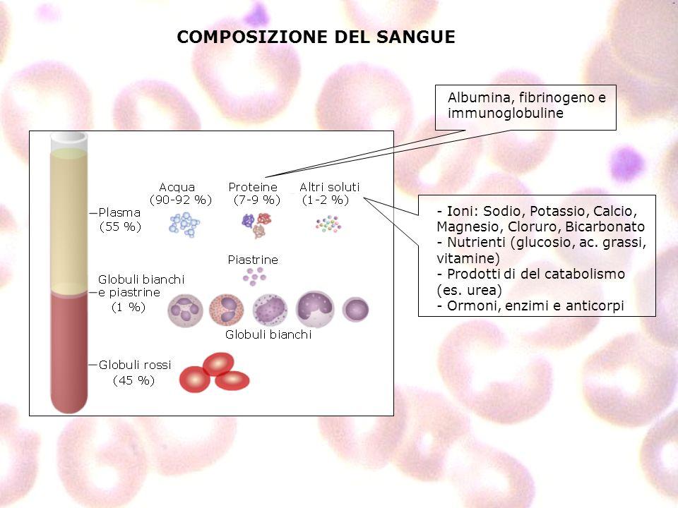COMPOSIZIONE DEL SANGUE Albumina, fibrinogeno e immunoglobuline - Ioni: Sodio, Potassio, Calcio, Magnesio, Cloruro, Bicarbonato - Nutrienti (glucosio,