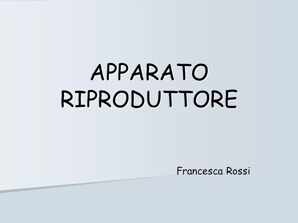 APPARATO RIPRODUTTORE Francesca Rossi