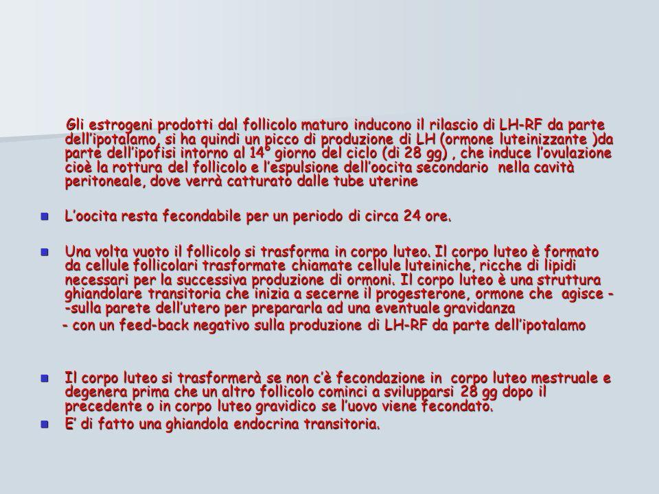 Gli estrogeni prodotti dal follicolo maturo inducono il rilascio di LH-RF da parte dellipotalamo, si ha quindi un picco di produzione di LH (ormone luteinizzante )da parte dellipofisi intorno al 14° giorno del ciclo (di 28 gg), che induce lovulazione cioè la rottura del follicolo e lespulsione delloocita secondario nella cavità peritoneale, dove verrà catturato dalle tube uterine Gli estrogeni prodotti dal follicolo maturo inducono il rilascio di LH-RF da parte dellipotalamo, si ha quindi un picco di produzione di LH (ormone luteinizzante )da parte dellipofisi intorno al 14° giorno del ciclo (di 28 gg), che induce lovulazione cioè la rottura del follicolo e lespulsione delloocita secondario nella cavità peritoneale, dove verrà catturato dalle tube uterine Loocita resta fecondabile per un periodo di circa 24 ore.