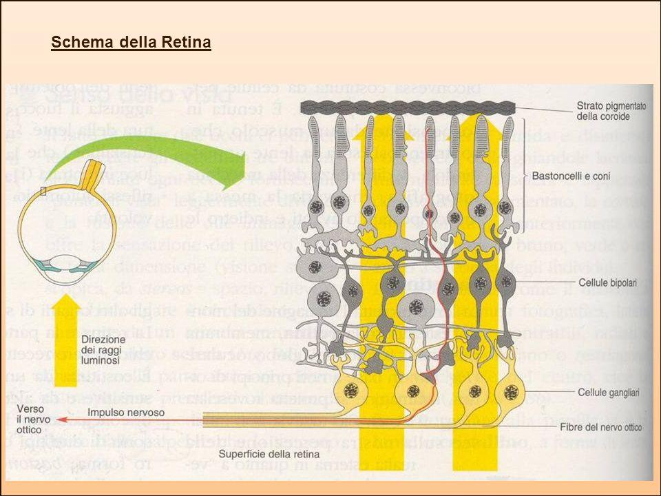 Schema della Retina