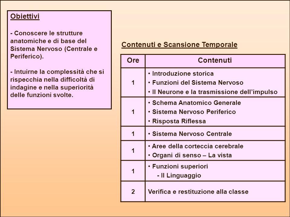 Contenuti e Scansione Temporale Obiettivi - Conoscere le strutture anatomiche e di base del Sistema Nervoso (Centrale e Periferico). - Intuirne la com