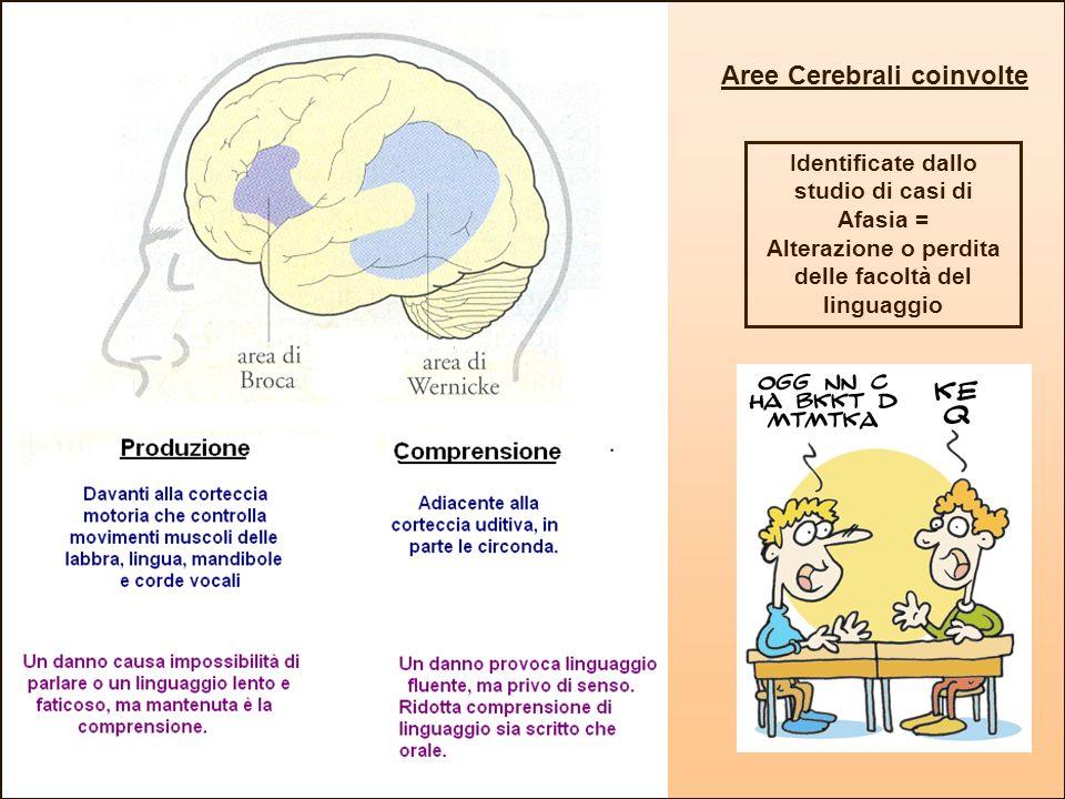 Identificate dallo studio di casi di Afasia = Alterazione o perdita delle facoltà del linguaggio Aree Cerebrali coinvolte