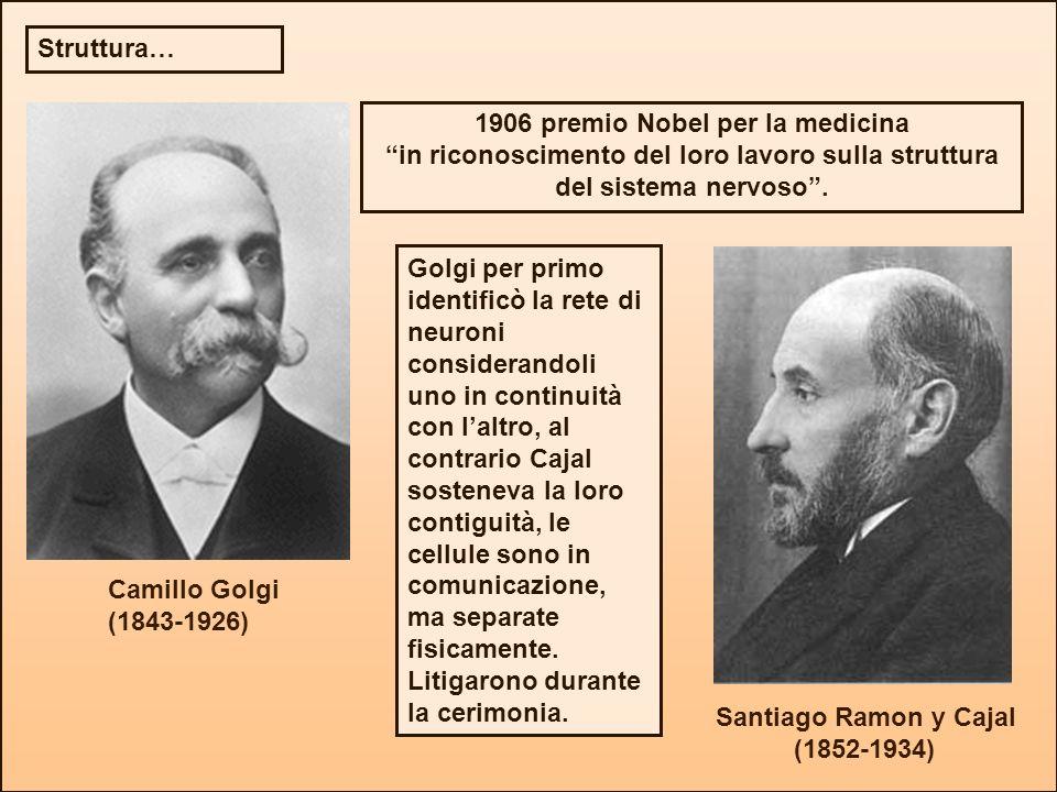 Camillo Golgi (1843-1926) Santiago Ramon y Cajal (1852-1934) 1906 premio Nobel per la medicina in riconoscimento del loro lavoro sulla struttura del s
