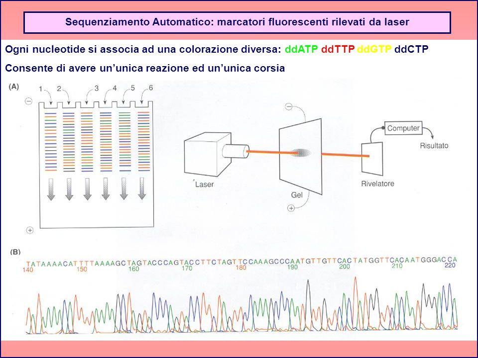 Ogni nucleotide si associa ad una colorazione diversa: ddATP ddTTP ddGTP ddCTP Consente di avere ununica reazione ed ununica corsia Sequenziamento Aut
