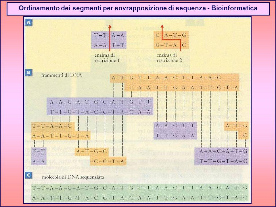 Ordinamento dei segmenti per sovrapposizione di sequenza - Bioinformatica