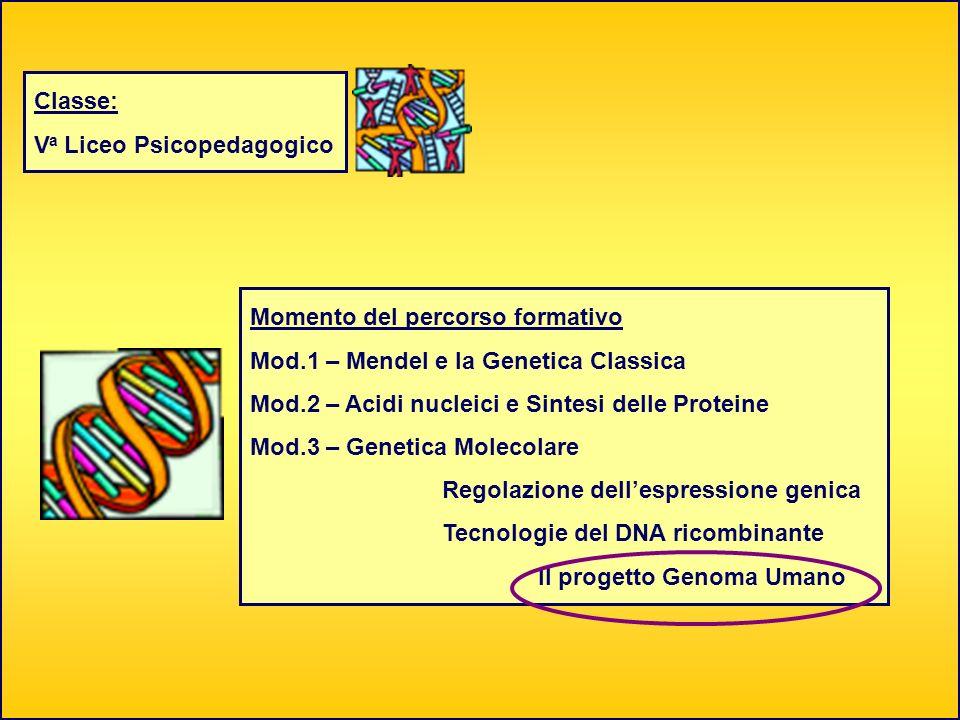 Classe: V a Liceo Psicopedagogico Momento del percorso formativo Mod.1 – Mendel e la Genetica Classica Mod.2 – Acidi nucleici e Sintesi delle Proteine