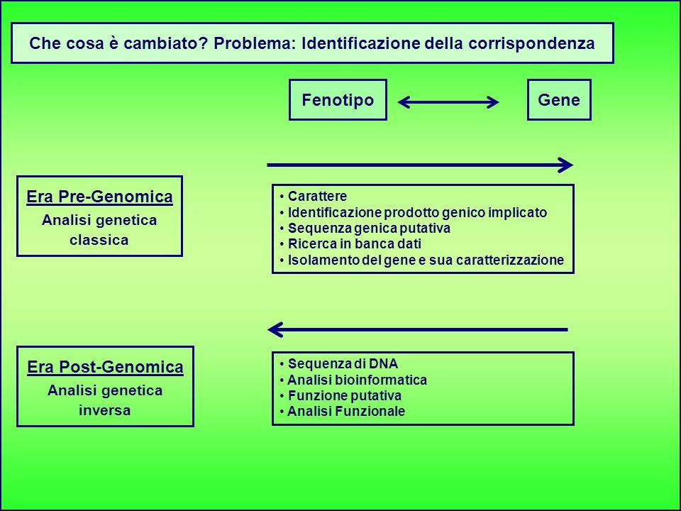 GeneFenotipo Che cosa è cambiato? Problema: Identificazione della corrispondenza Era Pre-Genomica Analisi genetica classica Era Post-Genomica Analisi