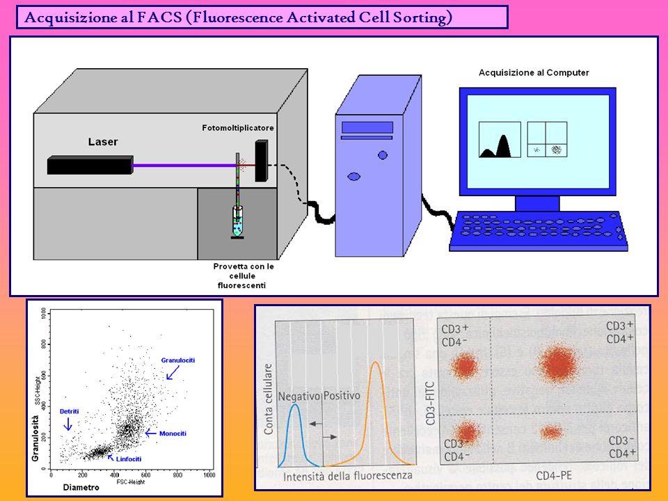 Acquisizione al FACS (Fluorescence Activated Cell Sorting)