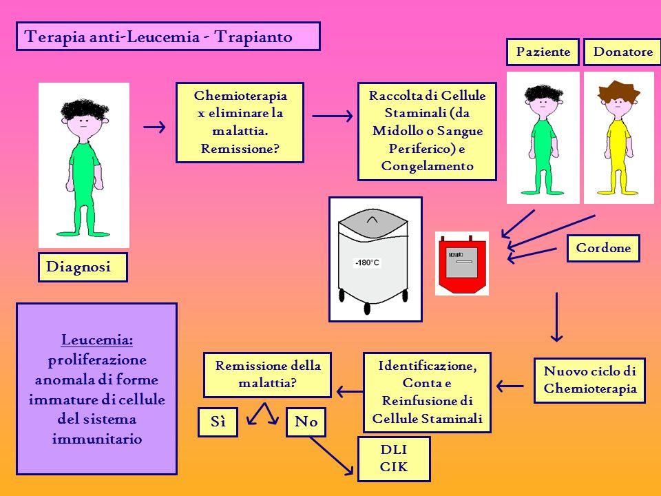Terapia anti-Leucemia - Trapianto Diagnosi Chemioterapia x eliminare la malattia.