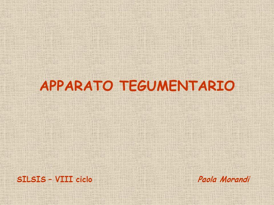 APPARATO TEGUMENTARIO SILSIS – VIII ciclo Paola Morandi