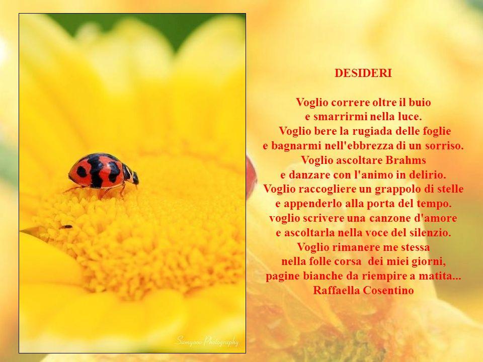 Il desiderio non è ciò che vedi, ma quello che immagini. Paulo Coelho