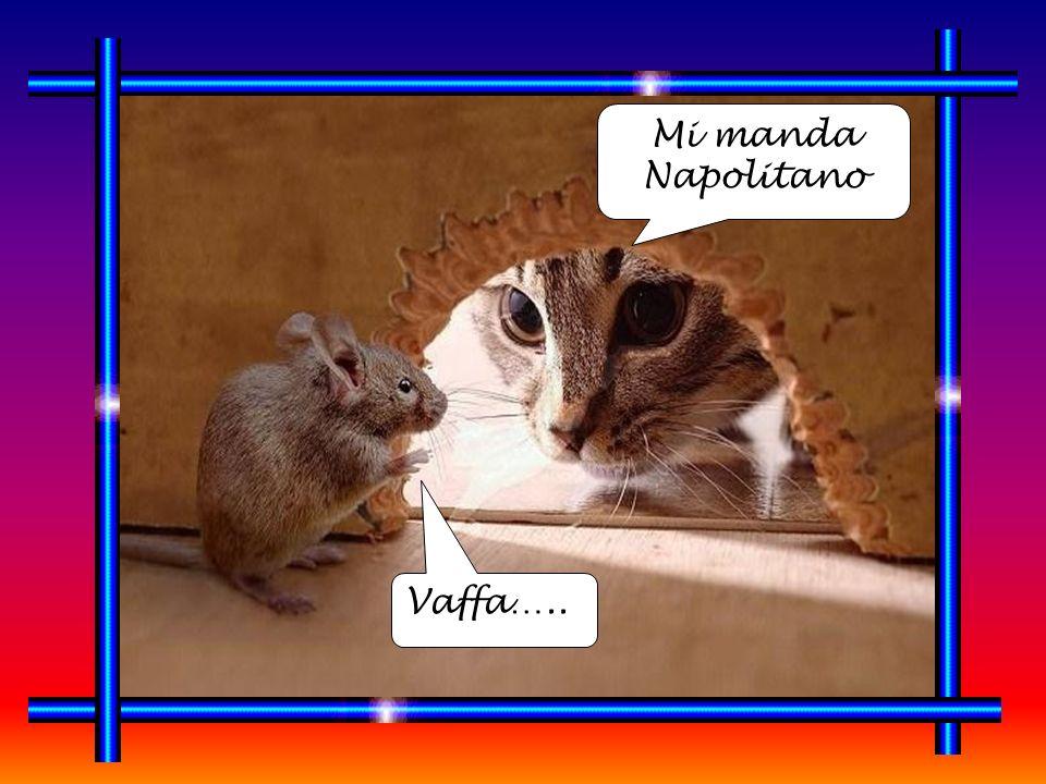 Mi manda Napolitano Vaffa…..