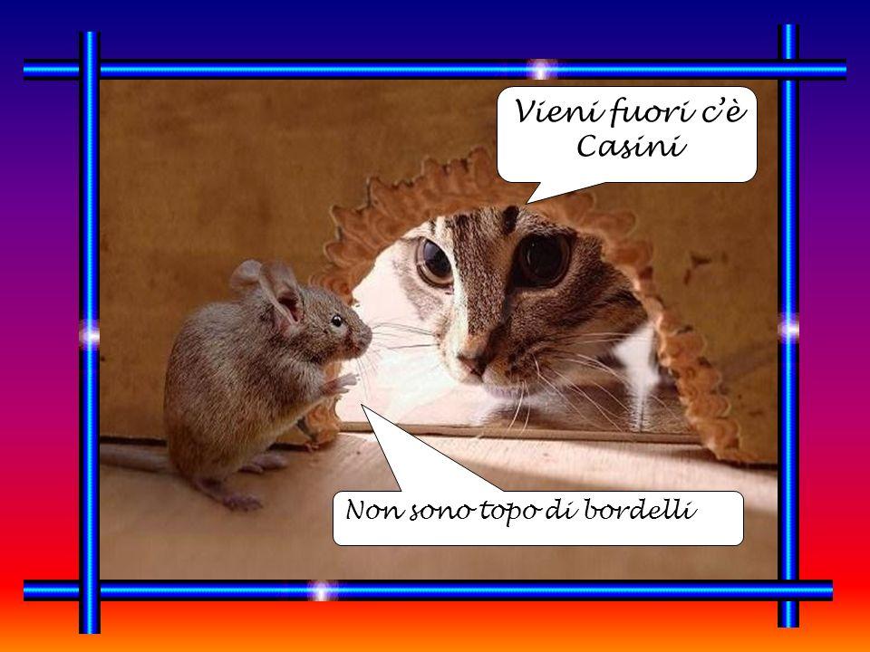 Vieni fuori cè Casini Non sono topo di bordelli