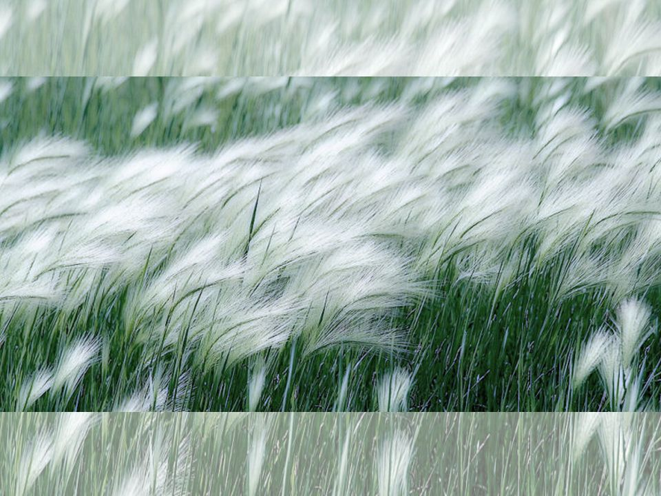 Vento Come un lupo è il vento Che cala dai monti al piano, corica nei campi il grano Ovunque passa è sgomento.