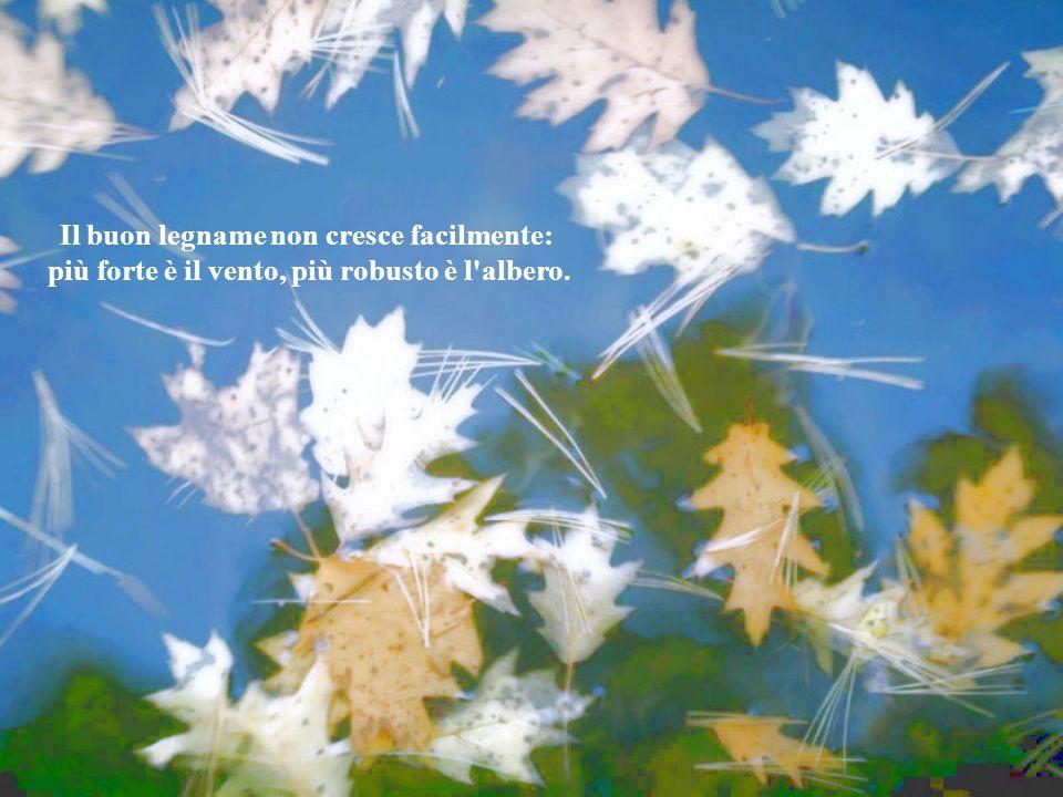 Il buon legname non cresce facilmente: più forte è il vento, più robusto è l albero.