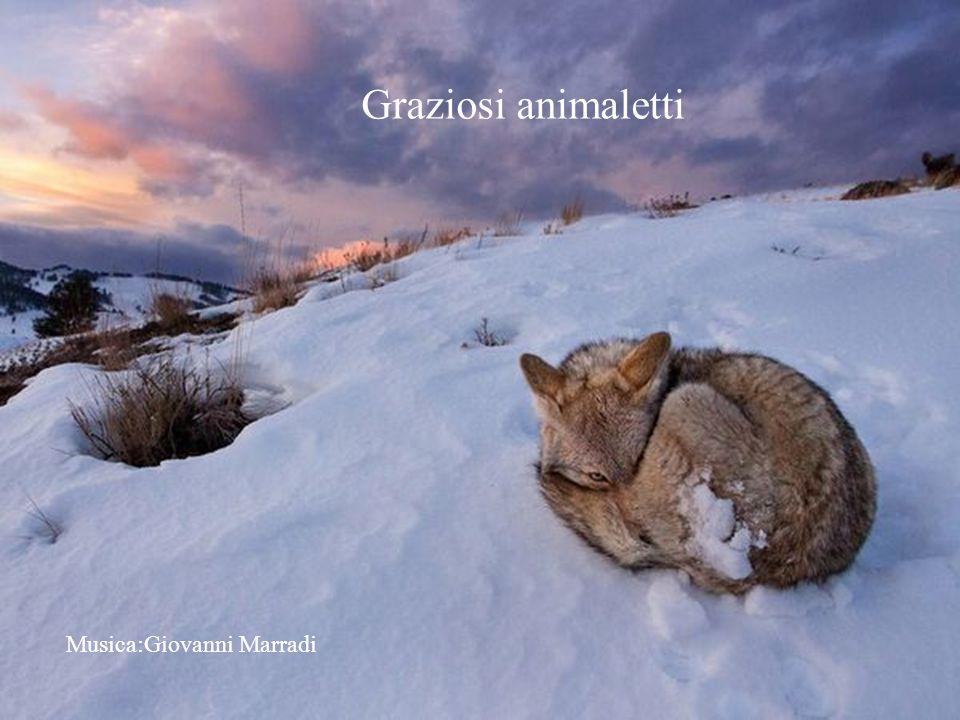 Graziosi animaletti Musica:Giovanni Marradi