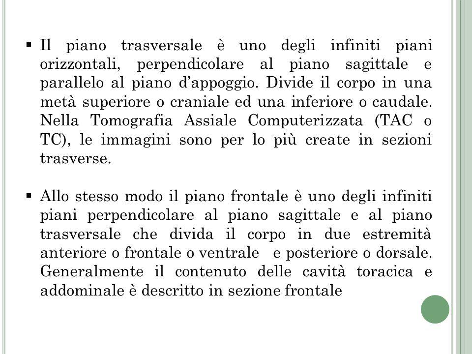Il piano trasversale è uno degli infiniti piani orizzontali, perpendicolare al piano sagittale e parallelo al piano dappoggio. Divide il corpo in una
