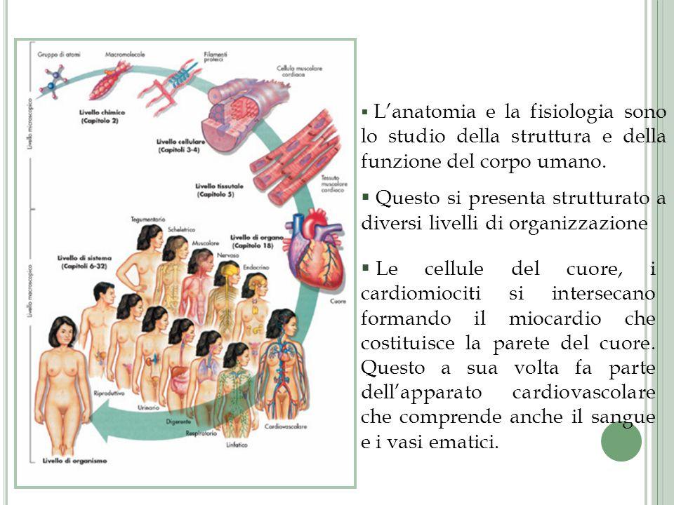 La tonaca mucosa è costituita da un epitelio di rivestimento.
