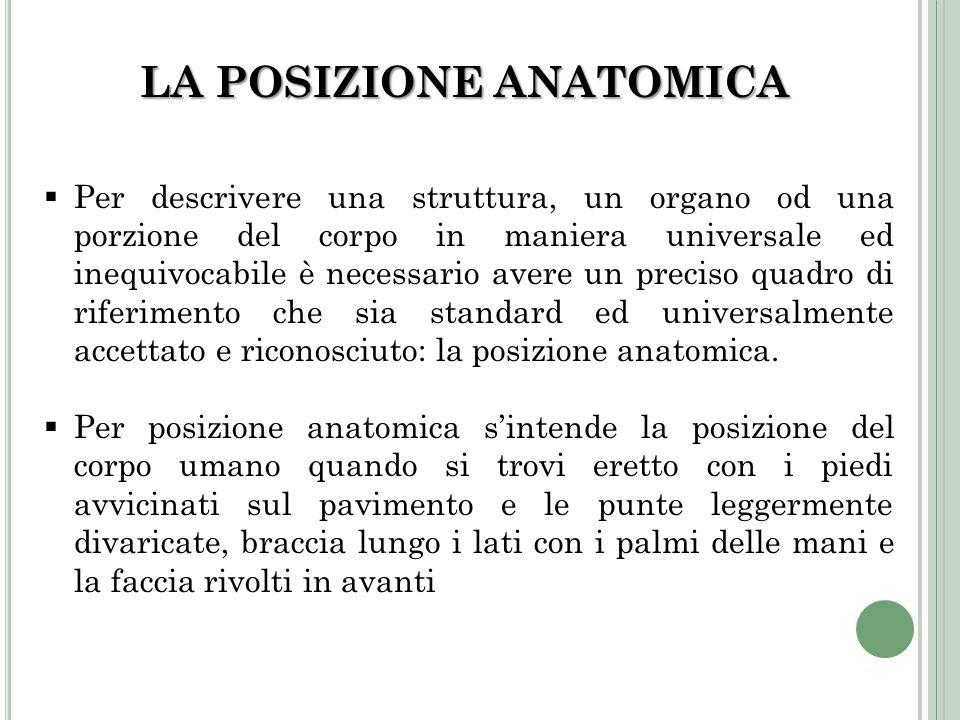 LA POSIZIONE ANATOMICA Per descrivere una struttura, un organo od una porzione del corpo in maniera universale ed inequivocabile è necessario avere un