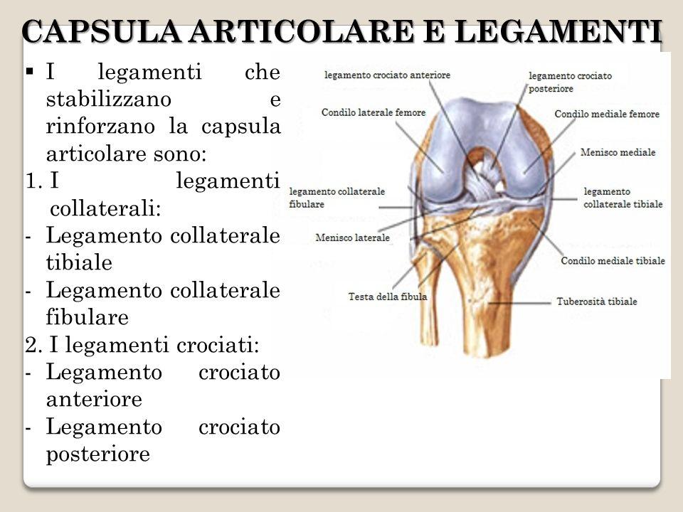 CAPSULA ARTICOLARE E LEGAMENTI I legamenti che stabilizzano e rinforzano la capsula articolare sono: 1.I legamenti collaterali: -Legamento collaterale