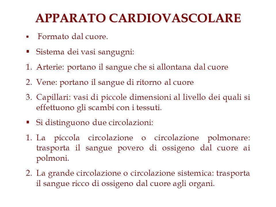APPARATO CARDIOVASCOLARE Formato dal cuore. Sistema dei vasi sangugni: 1.Arterie: portano il sangue che si allontana dal cuore 2.Vene: portano il sang