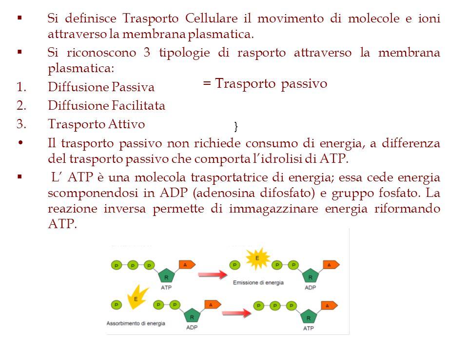 } Si definisce Trasporto Cellulare il movimento di molecole e ioni attraverso la membrana plasmatica. Si riconoscono 3 tipologie di rasporto attravers
