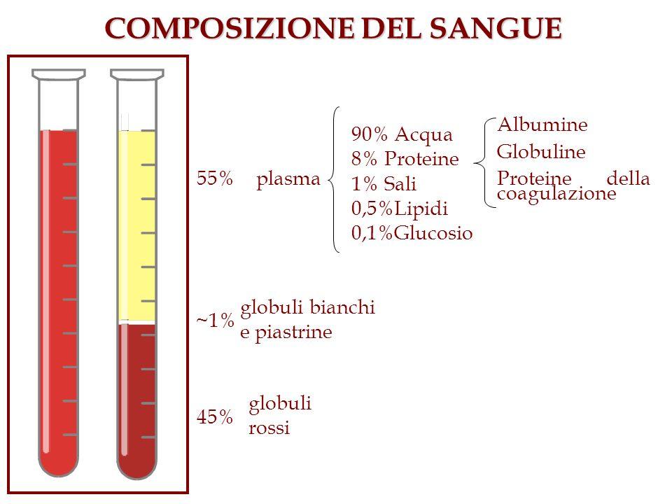 COMPOSIZIONE DEL SANGUE 45% 55% ~1% plasma globuli rossi globuli bianchi e piastrine 90% Acqua 8% Proteine 1% Sali 0,5%Lipidi 0,1%Glucosio Albumine Gl