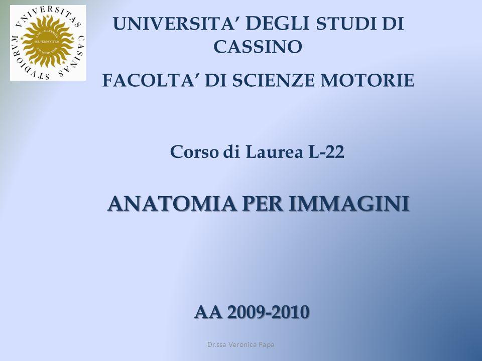 UNIVERSITA DEGLI STUDI DI CASSINO FACOLTA DI SCIENZE MOTORIE Corso di Laurea L-22 AA 2009-2010 ANATOMIA PER IMMAGINI Dr.ssa Veronica Papa