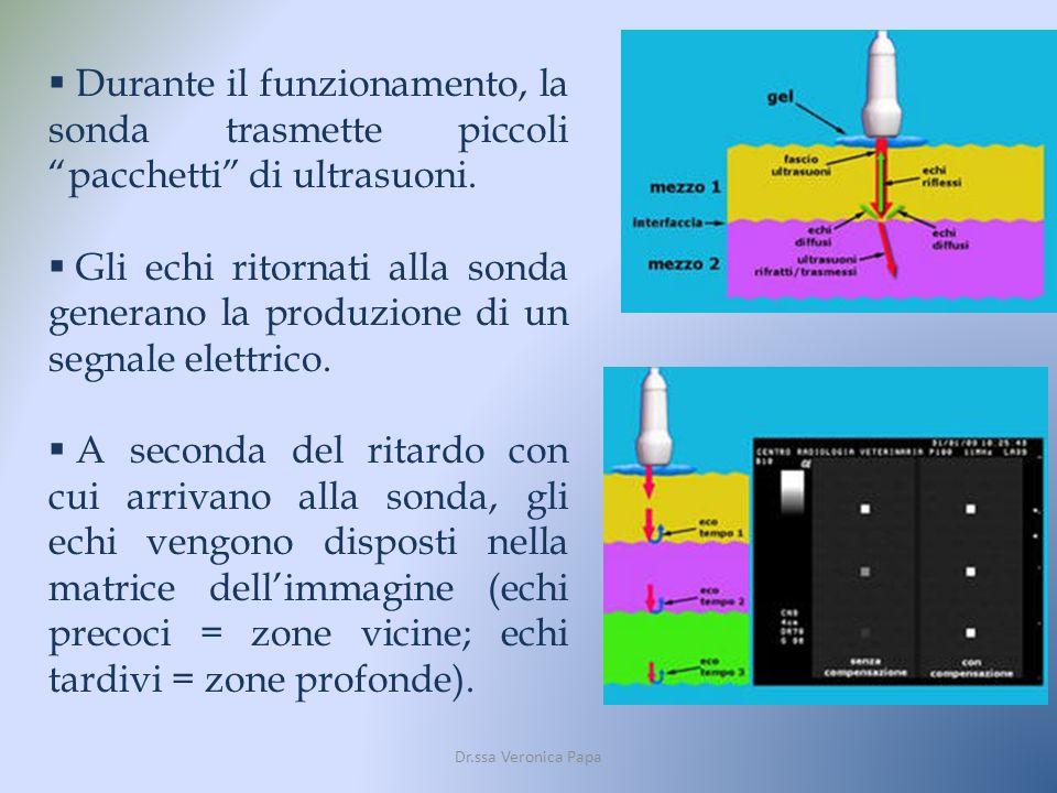 Dr.ssa Veronica Papa Durante il funzionamento, la sonda trasmette piccoli pacchetti di ultrasuoni. Gli echi ritornati alla sonda generano la produzion
