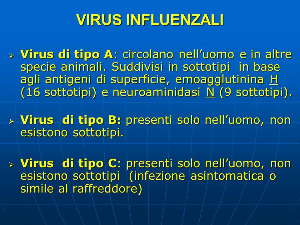 VIRUS INFLUENZALI Virus di tipo A: circolano nelluomo e in altre specie animali. Suddivisi in sottotipi in base agli antigeni di superficie, emoagglut
