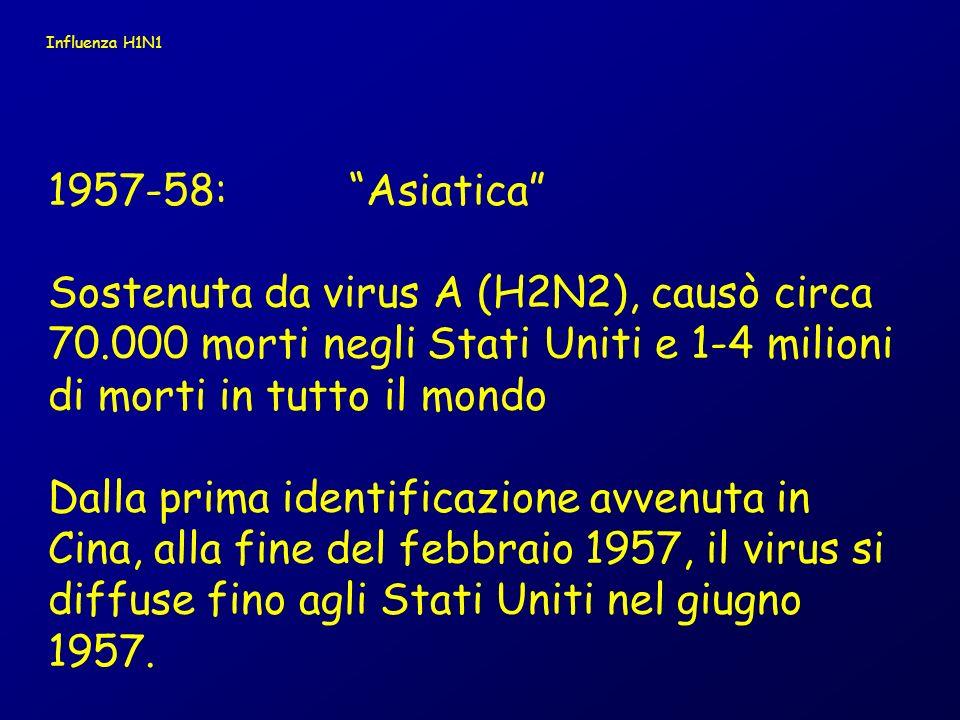 1968-69: Hong Kong Sostenuta da virus A(H3N2), causò appros- simativamente 34.000 decessi negli USA e 1- 4 milioni in tutto l mondo Questo virus era stato identificato in Hong Kong allinizio del 1968 e si diffuse negli USA entro un anno.