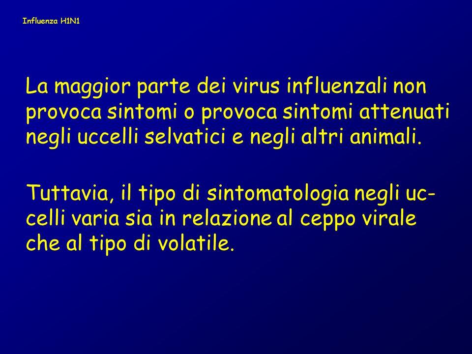 H15 H14 H13 H12 H11 H10 H9 H8 H7 H6 H5 H4 H3 H2 H1 N9 N8 N7 N6 N5 N4 N3 N2 N1 Sottotipi antigenici dell emagglutinina (H) e della neuraminidasi (N)