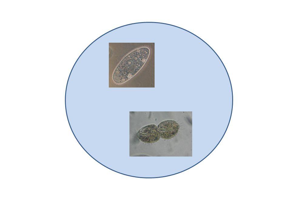 Sorvoliamo sui parameci, argomento che interessa naturalmente i biologi, e guardiamo più da vicino lacqua stessa ingrandendola altre 2000 volte.