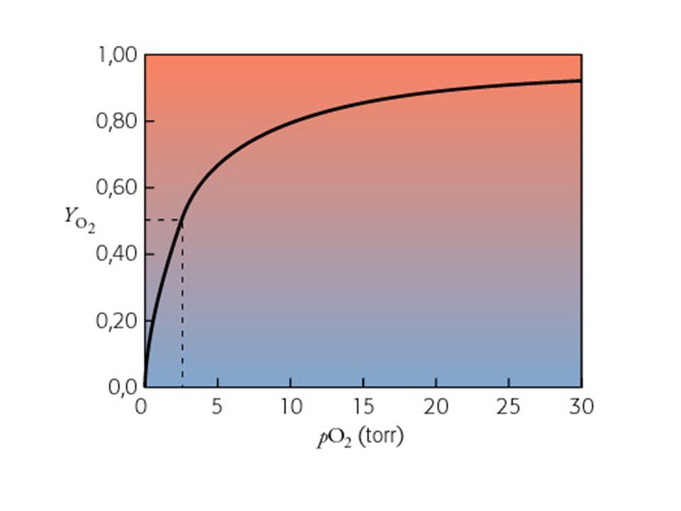 P50 = pressione parziale di ossigeno alla quale si ha il 50% di saturazione dei siti di legame dellossigeno P 50 mioglobina= 2 mmHg P 50 emoglobina= 26 mmHg