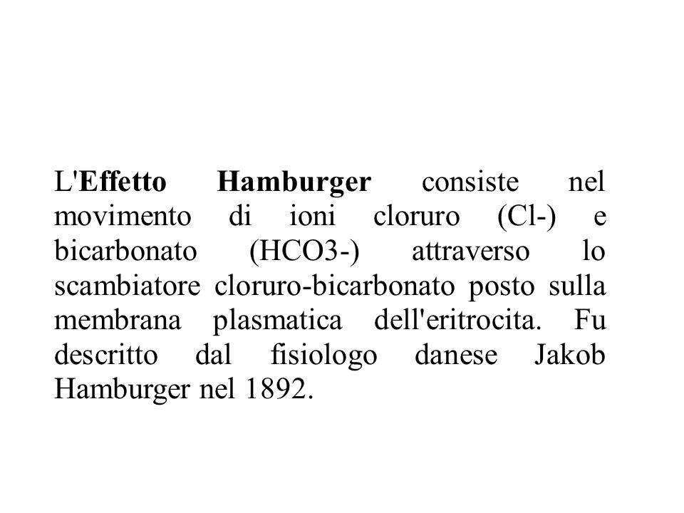 L'Effetto Hamburger consiste nel movimento di ioni cloruro (Cl-) e bicarbonato (HCO3-) attraverso lo scambiatore cloruro-bicarbonato posto sulla membr
