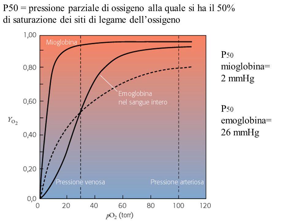 P50 = pressione parziale di ossigeno alla quale si ha il 50% di saturazione dei siti di legame dellossigeno P 50 mioglobina= 2 mmHg P 50 emoglobina= 2