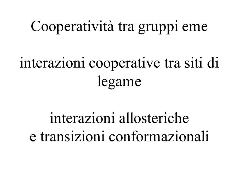 Cooperatività tra gruppi eme interazioni cooperative tra siti di legame interazioni allosteriche e transizioni conformazionali
