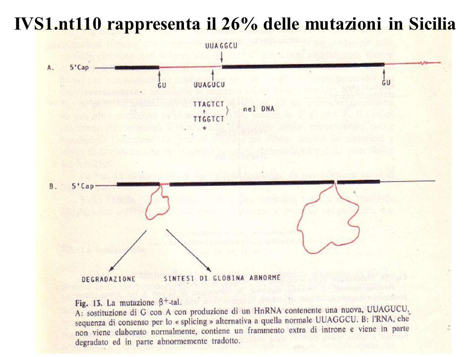 IVS1.nt110 rappresenta il 26% delle mutazioni in Sicilia