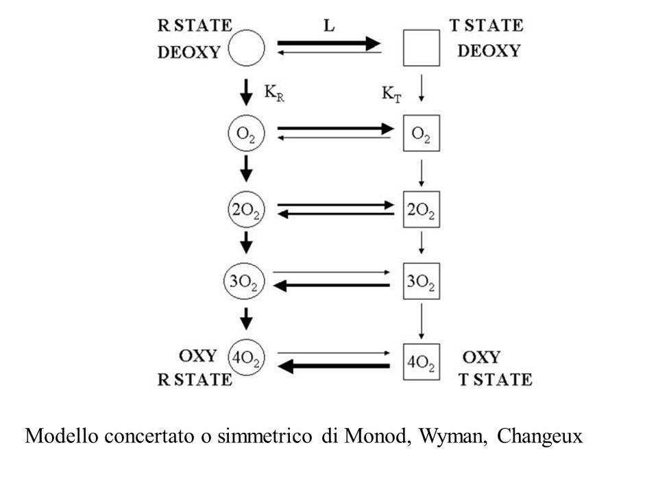 Modello concertato o simmetrico di Monod, Wyman, Changeux