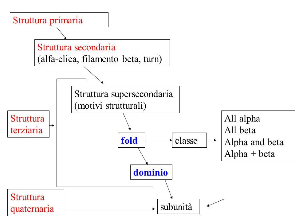 Struttura primaria Struttura secondaria (alfa-elica, filamento beta, turn) Struttura supersecondaria (motivi strutturali) fold dominio classe subunità